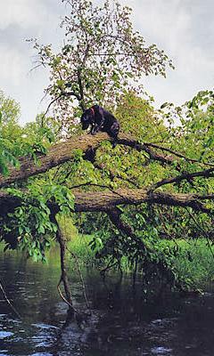 Harriet climbs a tree!