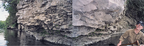 root_rock_595